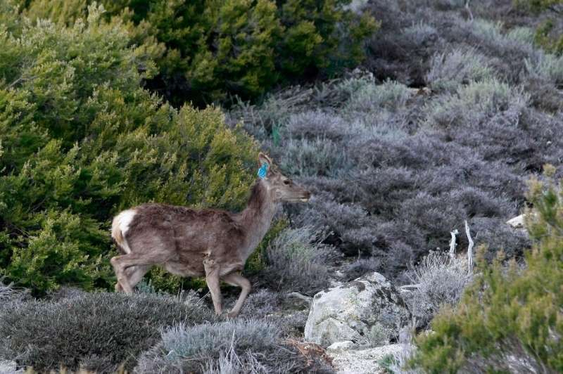 Conservationists fear that the fires engulfing parts of Europe will cause a terrible toll on wildlife