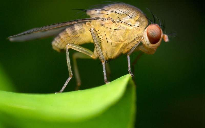 Controlling carbs and fat: learning from the fruit fly