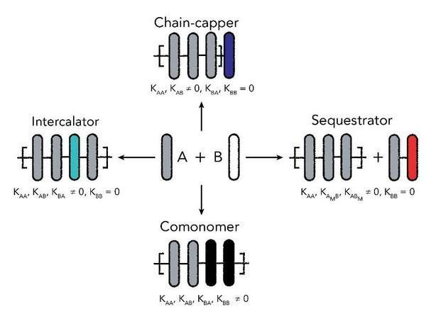 Controlling the length of supramolecular polymers