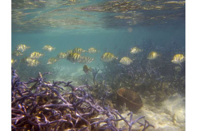 Coral reef cover, biodiversity, fish catches have declined by half since the 1950s