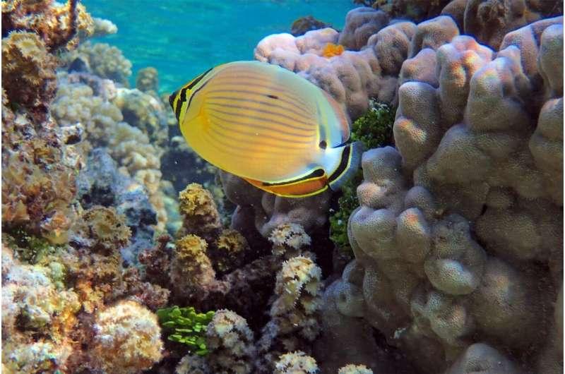 Corals may need their predators' poop