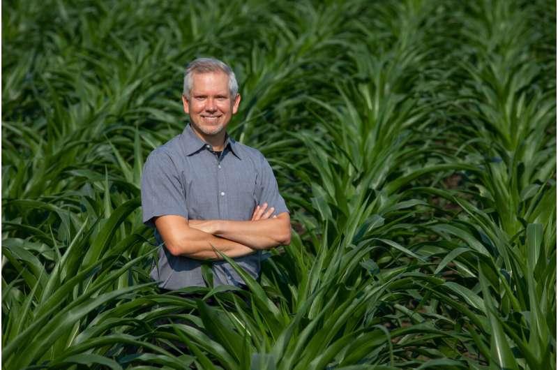 Corn's genetic diversity on display in new genome study