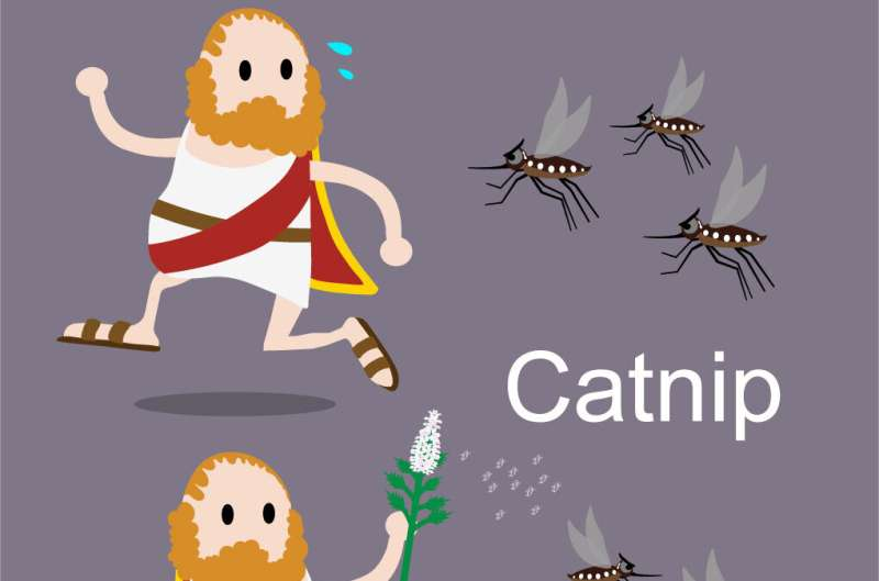 Could catnip become the new DEET?