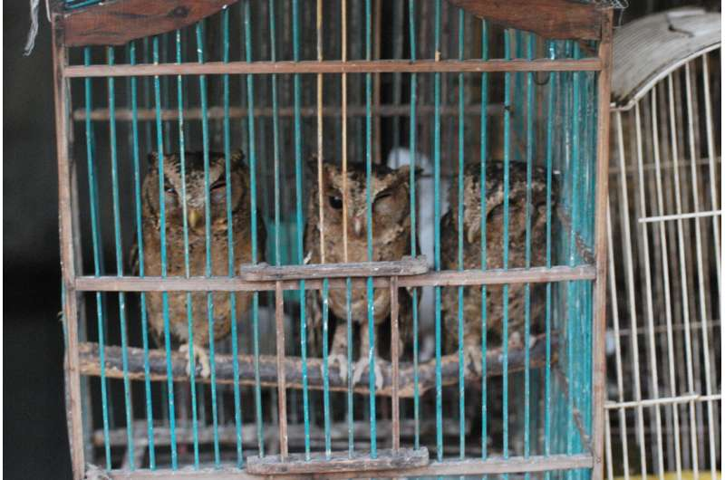 COVID-19 awareness may reduce demand for wildlife products in Asia