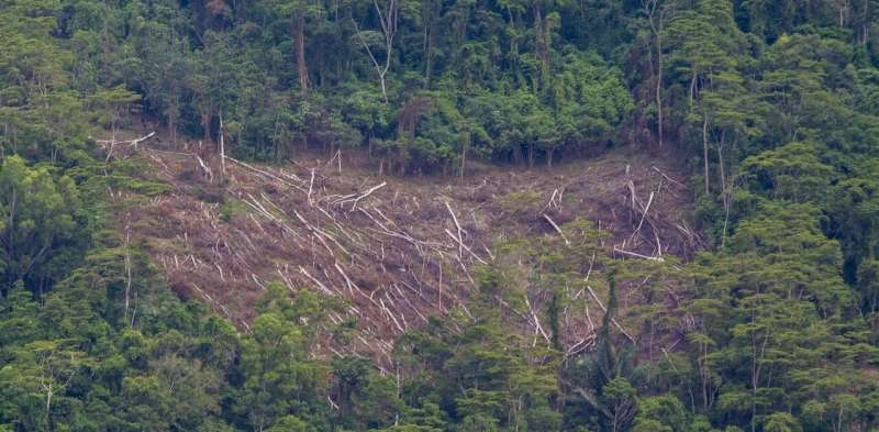 COVID-19, public ignorance and democratic decline: three forces chipping away at Indonesia's poor environmental conservation