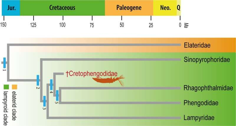 Cretaceous amber fossil sheds light on bioluminescence in beetles