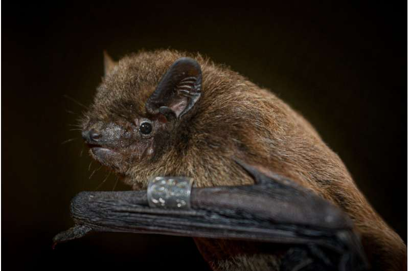 Cryptic sense of orientation of bats localised: the sixth sense of mammals lies in the eye