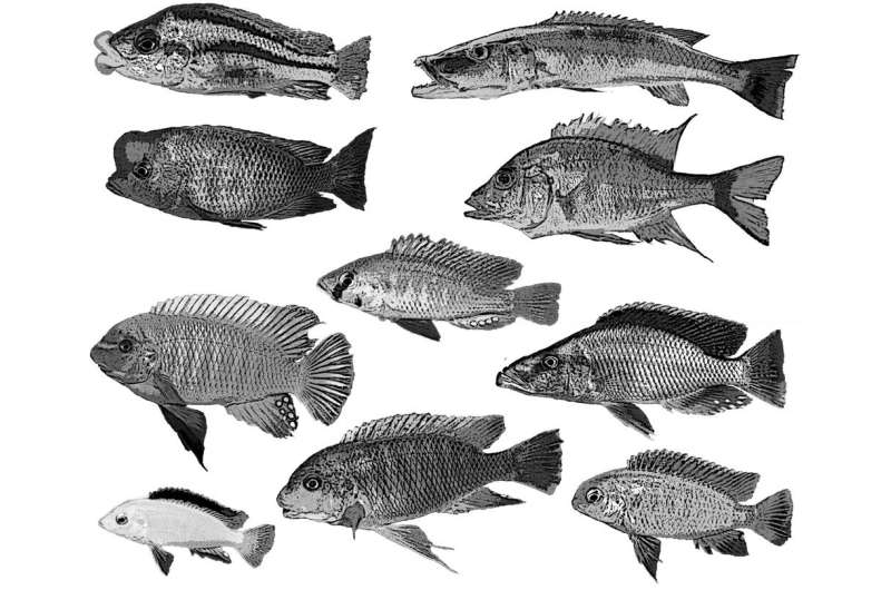 CT scans offer new view of Lake Malawi cichlid specimens
