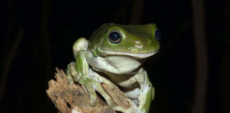 Dead, shrivelled frogs are unexpectedly turning up across eastern Australia—we need your help to find out why