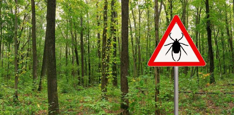 Debunking 4 common myths about ticks