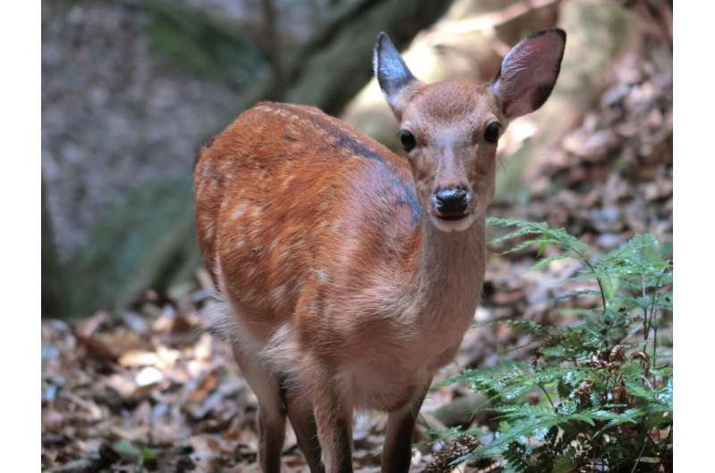 Declining deer population likely due to natural regulation