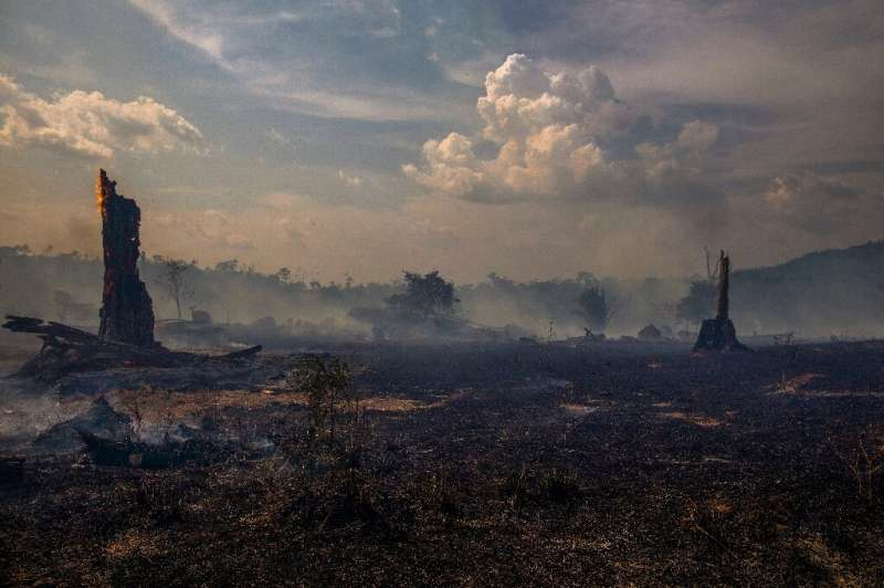 Deforestation, drought and fires in the Amazon could transform part of the rainforest into a grassland