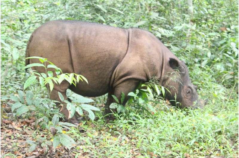 Development of microsatellite markers for censusing of endangered rhinoceros