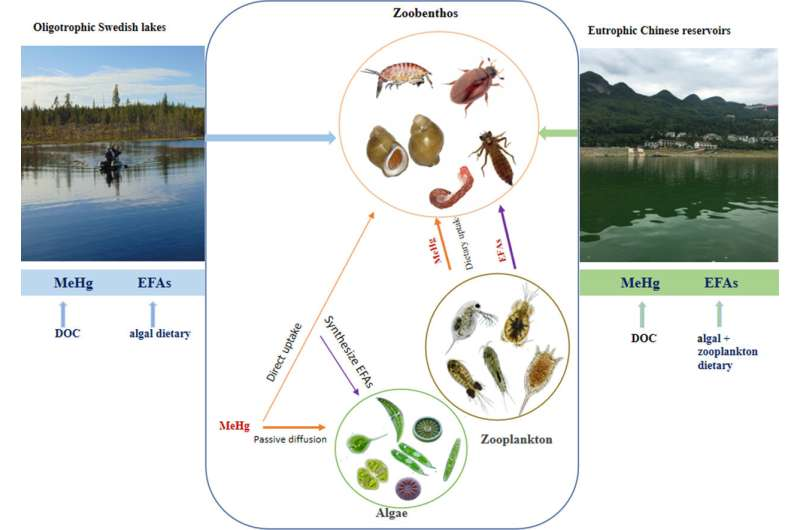 Diet and habitat affect bioaccumulations of hg and polyunsaturated fatty acids in zoobenthos