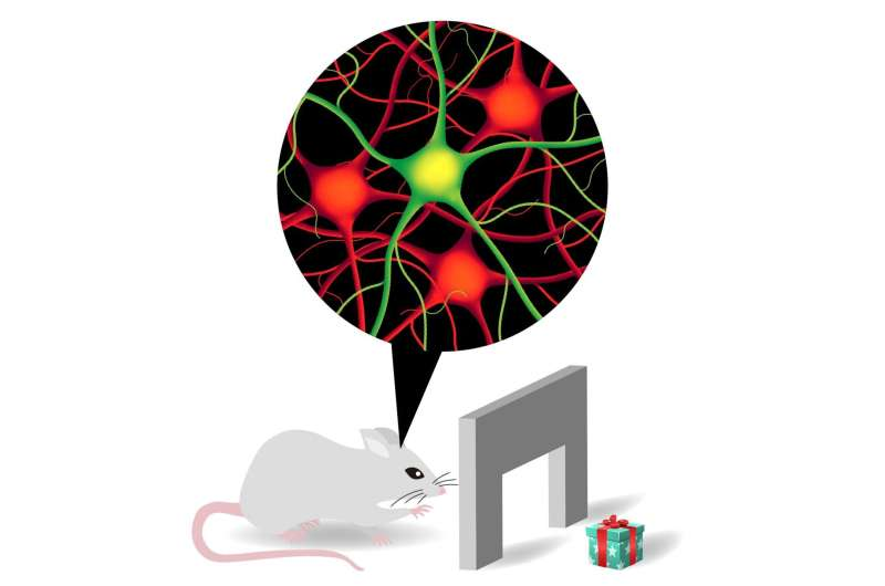 Different types of neurons interact to make reaching-and-grasping tasks possible