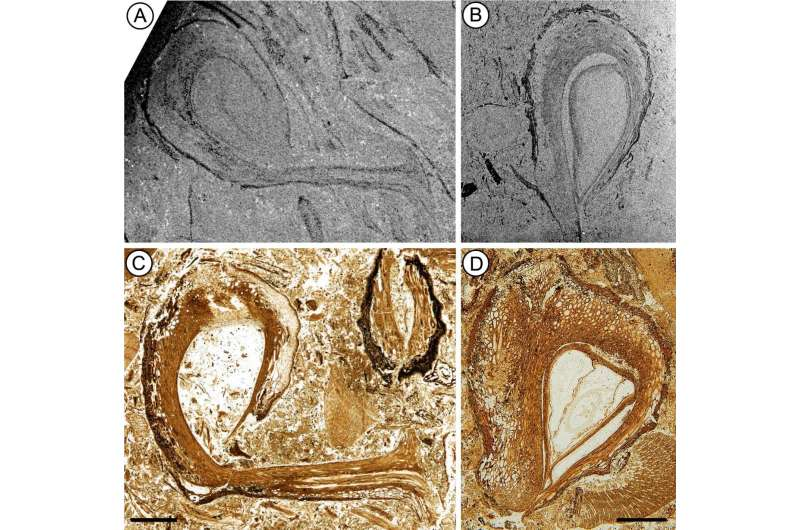 Dinosaur-age fossils provide new insights into origin of flowering plants