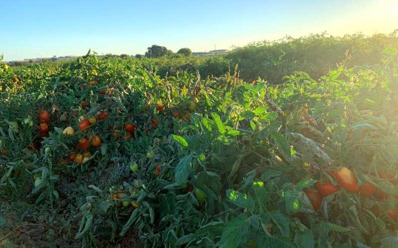 El descubrimiento aumenta la probabilidad de cultivar alimentos a pesar de la sequía
