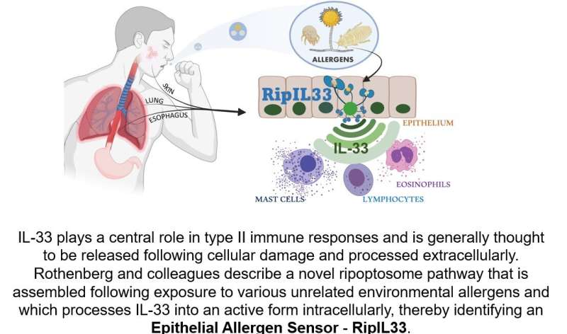 Discovery of rapid-response signaling platform suggests new path for blocking allergic inflammation