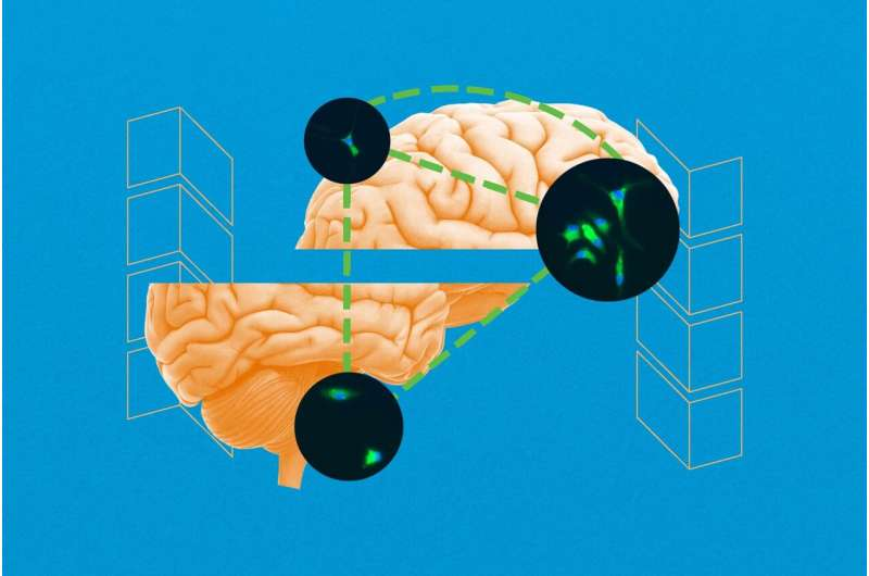 Discovery of unknown brain-repair process could lead to new epilepsy treatments