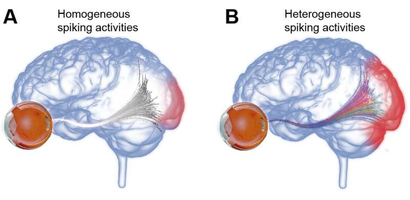 Diverse neural signals are key to rich visual information!