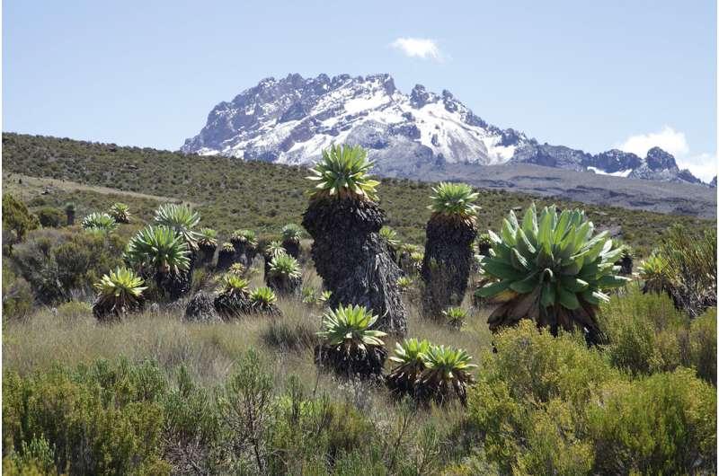 Diversity matters: Species richness keeps ecosystems running