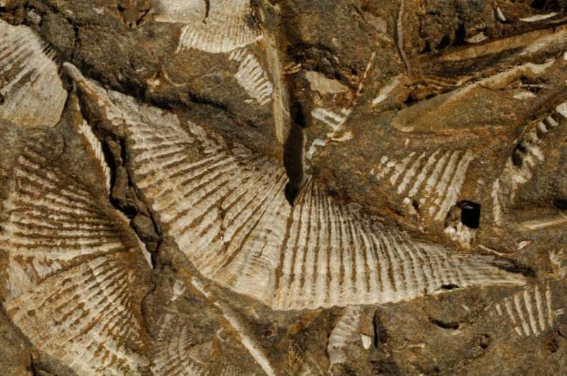 Diving into devonian seas: Ancient marine faunas unlock secrets of warming oceans