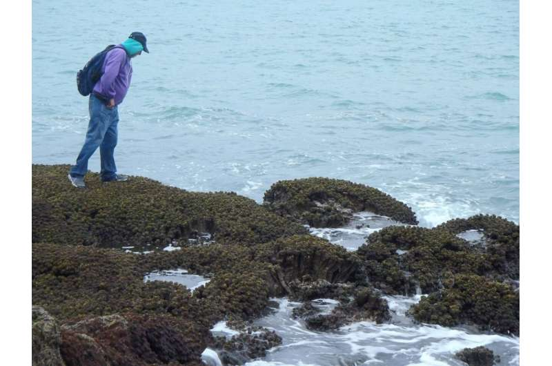 DNA data and modelling reveal potential spread of invasive species