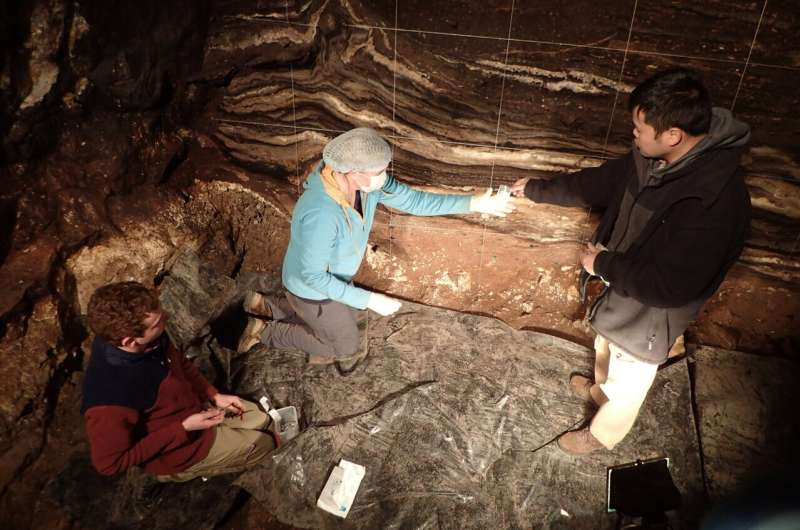 DNA from sediment reveals epic history of Denisova Cave