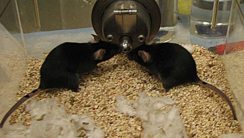 Do genetics control who our friends are? It seems so with mice