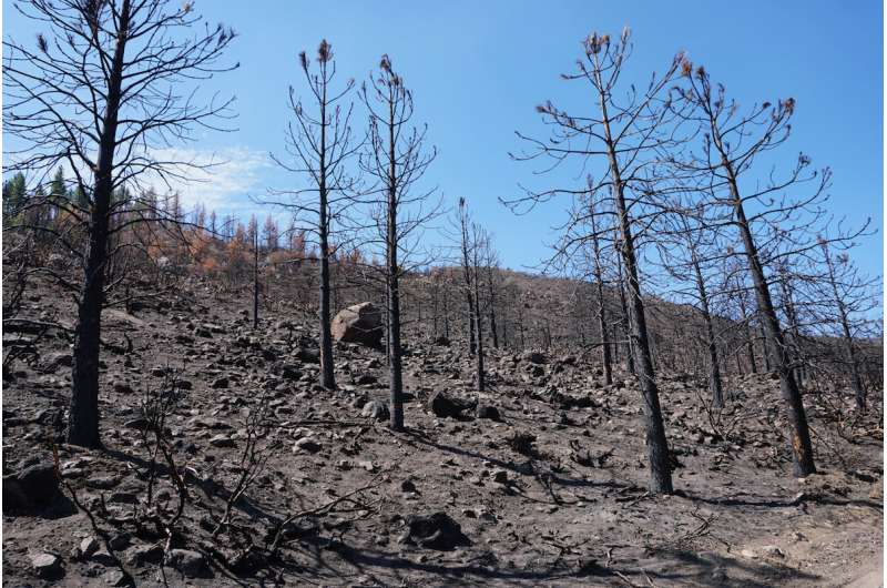Does cold wildfire smoke contribute to water repellent soils in burned areas?