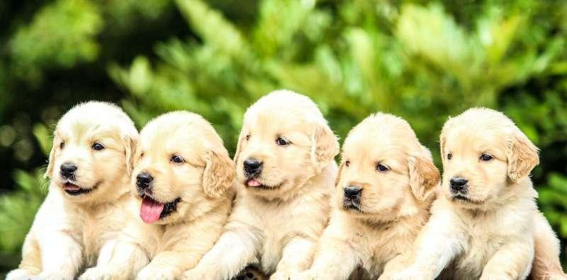 paquete de perro
