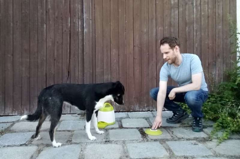 Dogs may not return their owners' good deeds