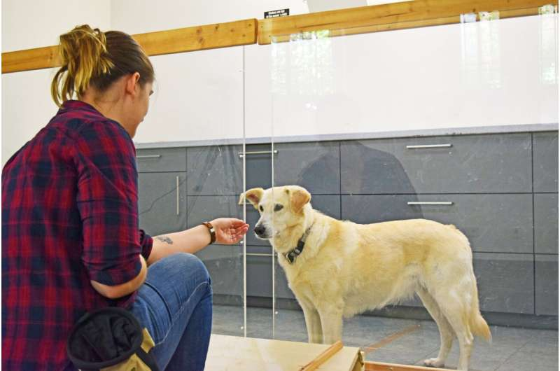 Dogs tell the difference between intentional and unintentional action