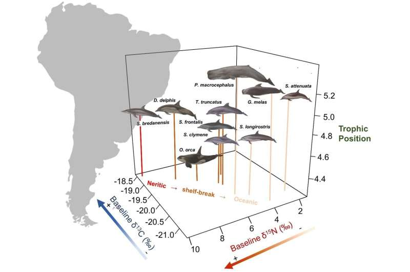 Dolphin species that live together, do not necessarily compete for food