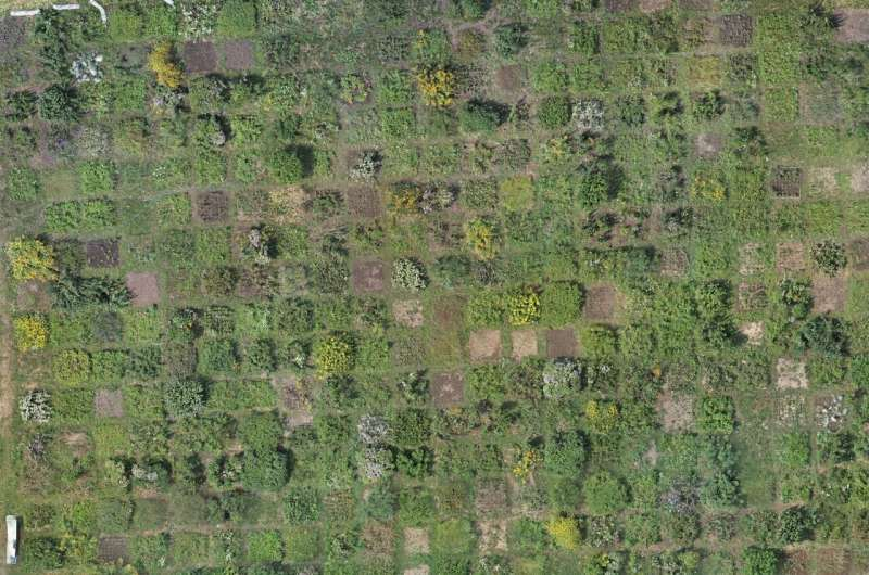 Drone-based photogrammetry: A reliable and low-cost method for estimating plant biomass