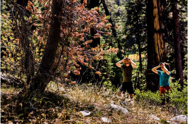 Drought and climate change shift tree disease in sierra nevada