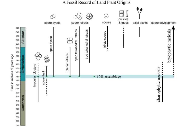Early land plants evolved from freshwater algae, fossils reveal
