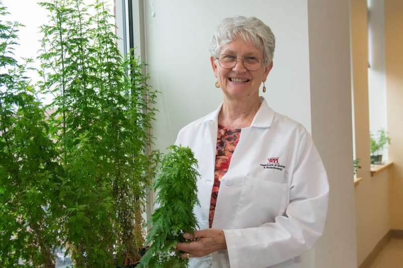 Early research finds extracts from sweet wormwood plant can inhibit the COVID-19 virus