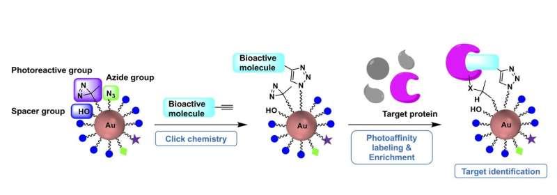 Easily assembled gold nanoparticle scaffolding serves as molecular probe