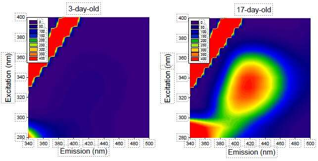 Easy detection of fluorescence emitted by protein behind aging