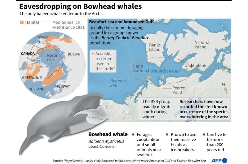 Eavesdropping on Bowhead whales