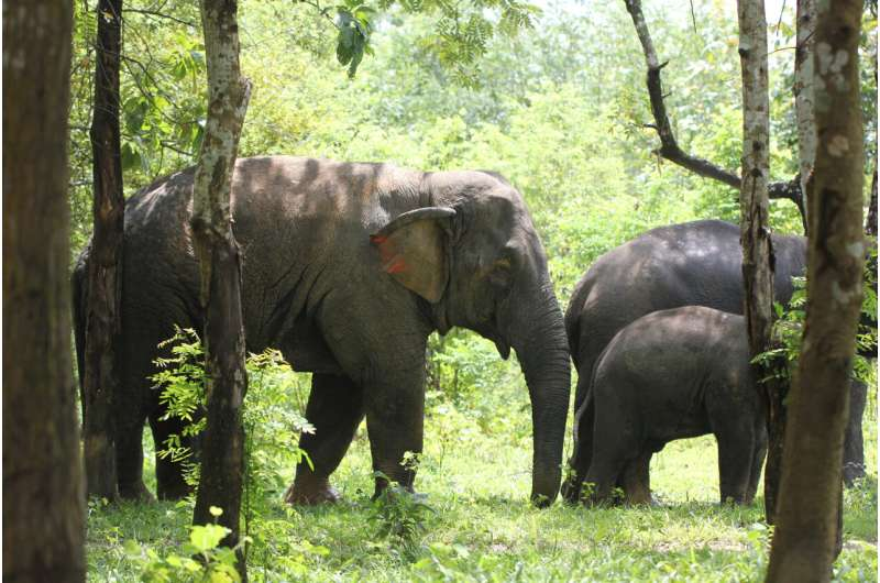 Elephants strive to cooperate with allies, until the stakes get too high