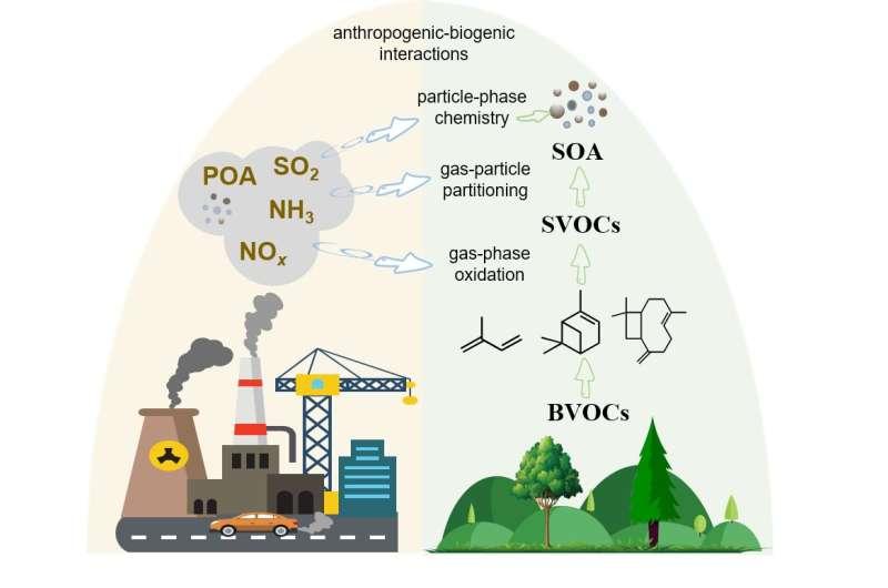 Emissions from human activity modify biogenic secondary organic aerosol formation