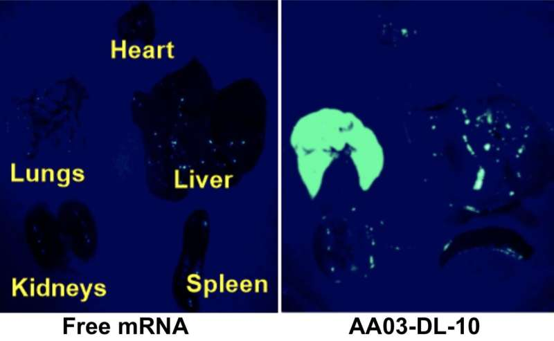Enabling safe delivery of RNA drugs to the lungs