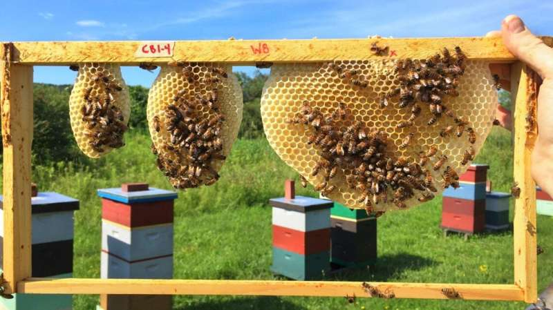 Engineers may learn from bees for optimal honeycomb designs
