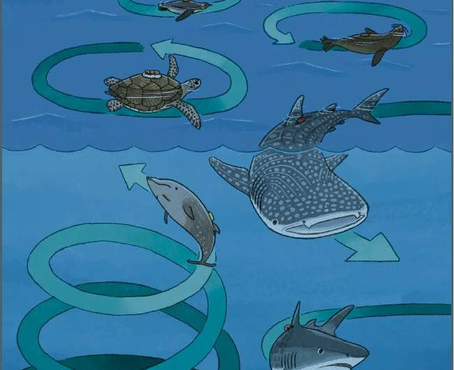 Enigmatic circling behavior captured in whales, sharks, penguins, and sea turtles