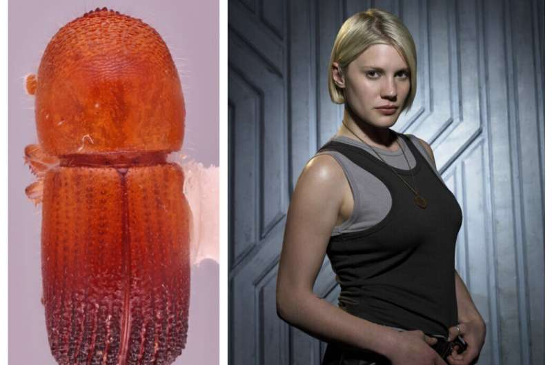 Entomologists discover dozens of new beetle species--and name some after iconic sci-fi heroines