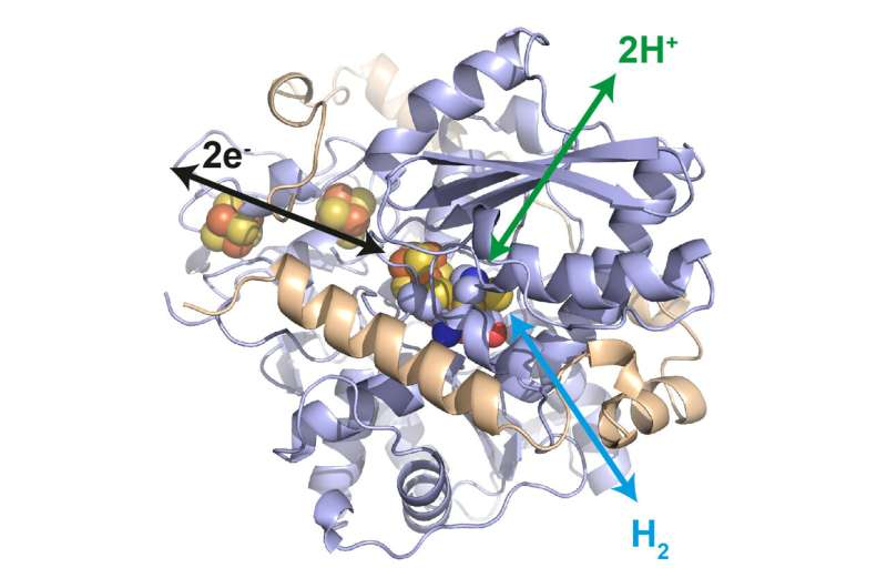 Enzyme system for the hydrogen industry