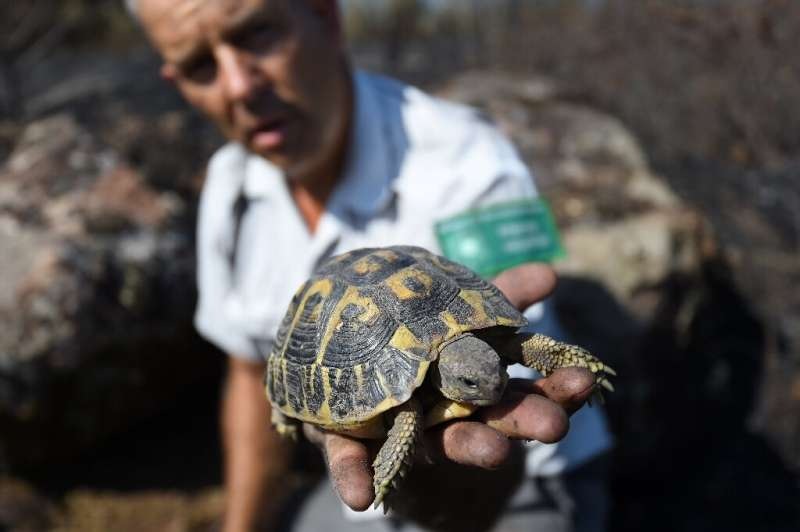 Equipped with antennas, around twenty specialist volunteers search for surviving Hermann's tortoises