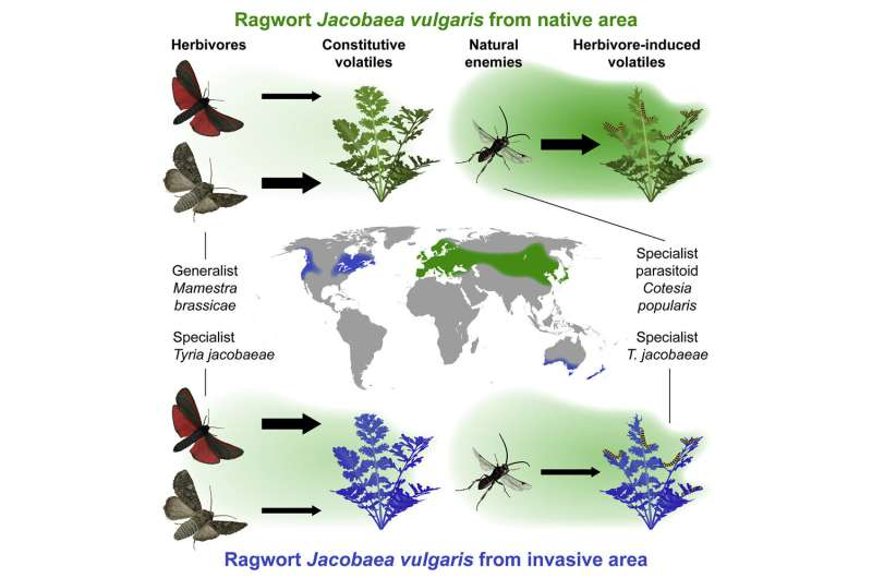 Evolutionary change in protective plant odors